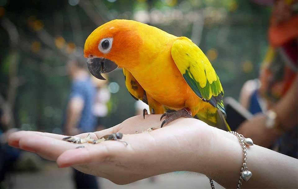 Sconto 15% Mangime e Accessori Uccelli | Emporio della Natura | Monte S. Vito, Via dell'Artigiano, 2 | Offerta valida fino al 30/03/18
