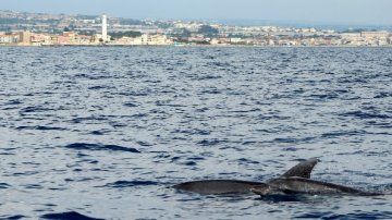 I delfini di Montalbano