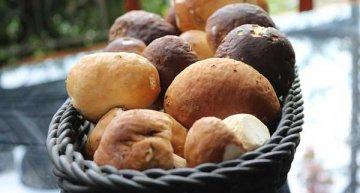 Sagra del Fungo Porcino dei Nebrodi a Alcara li Fusi