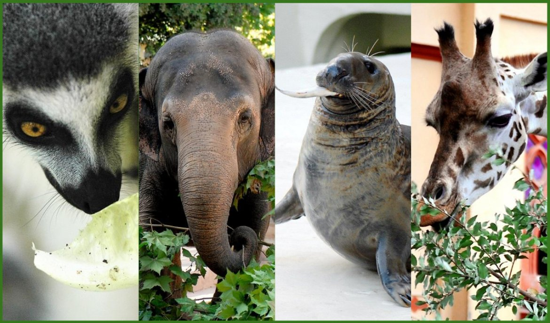 Al Bioparco tornano i pasti degli animali