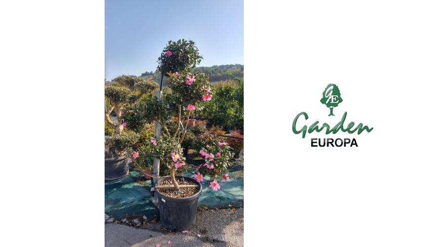 Jesi - Sconto 20% Piante da Esterno | Garden Europa | Jesi, Via Esinante, 5 | Tel. 0731214625 | Offerta valida fino al 31/07/19