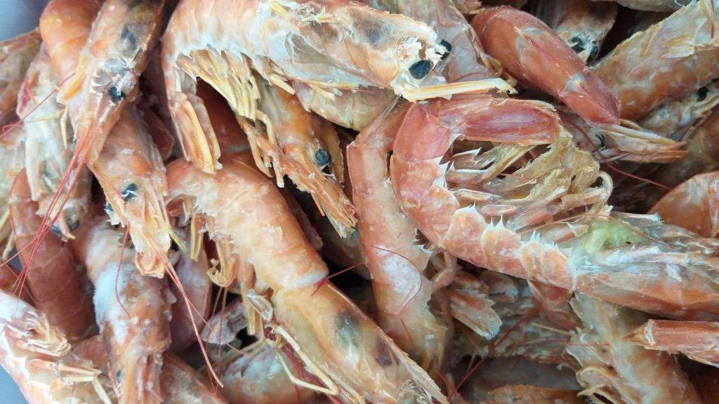 Jesi - Sconto 25% Gambero Argentino Grande   Sapore di Mare   Jesi, Via Bordoni, 7   Tel. 0731 208745   Offerta valida fino al 31/03/19