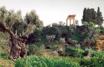 Agrigento, aprirà al pubblico i giardini di Villa Genuardi