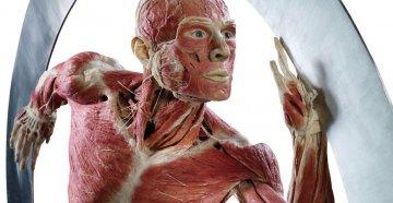 'Body Worlds Vital': a Palermo la mostra sul corpo umano visitata da oltre 50 milioni di persone nel mondo
