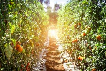 Nasce l'Orto Sociale a Petralia Soprana: terreni gratuiti ai cittadini per coltivarli