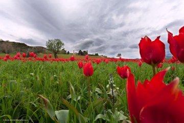 """Blufi e i tulipani rossi: la magia della piccola """"Olanda di Sicilia"""""""