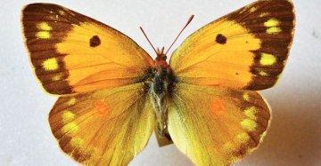 Non solo occultismo: gli insetti del