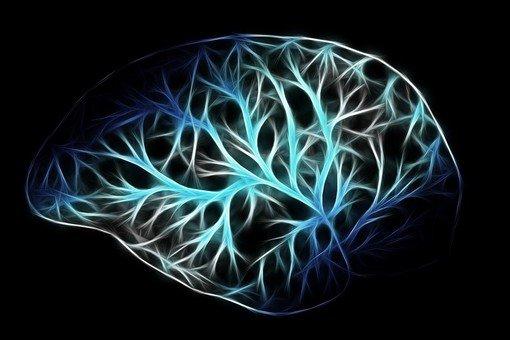 Vigevano24: Settimana del Cervello, Quanto la tecnologia ed i suoi strumenti vanno ad influire sulle capacità cognitive?