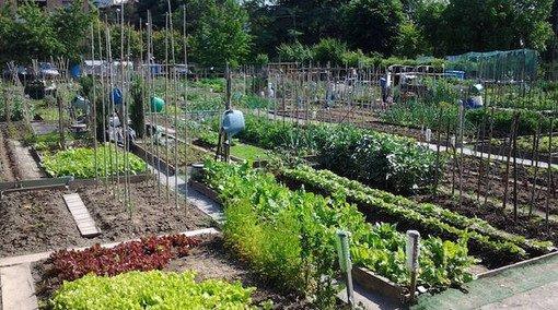 Vigevano24: bando per la concessione di terreni ad uso orti urbani