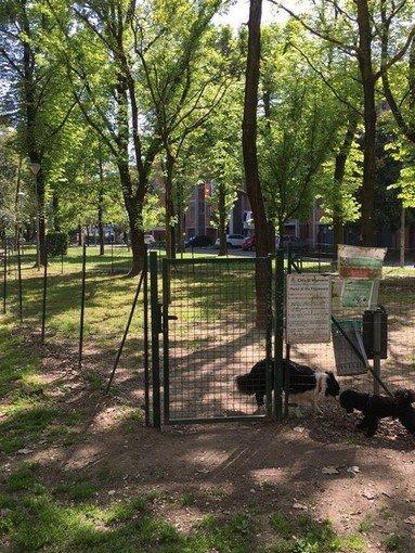 Vigevano24: saranno abbattuti una trentina di alberi in città per ragioni di sicurezza