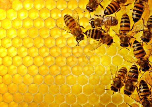 L'allevamento di api di Dina